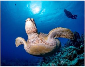 Sea Turtle   Underwater photo   Premium Art Print   Scuba Diver Art   Scuba diver photo   Fine Art Prints