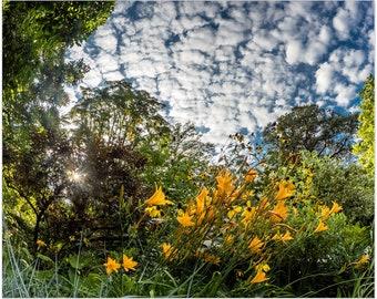 Fisheye view of Day Lilies Flowers  Central Park Garden Premium Art Print   Conservatory Garden   NYC   Fine Art Prints