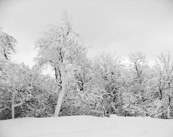 Snowy Winter Trees Fine Art Print   Greeting Card   Home Decor   Black and White Photo   Winter landscape   Ski House Decor