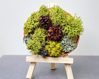 Pacific Northwest Forest Mini Living Portrait, Rare Houseplants, Best Friend Gift, For Coworkers, Moss Art Miniature Garden, Office Greenery