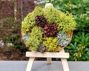"Pacific Northwest Forest Mini Living Portrait, 3-4"" Indoor Live Lichen Moss Art, Desk Plant, Moss Decor, Unique Gift for Him, Office gift"