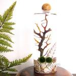 FREE Shipping & FREE Gift Box, Slender Glass Vase with Wood Ball Marimo Moss Ball Terrarium Kit