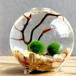 Single Glass Globe Marimo Moss Ball Terrarium Kit