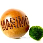 2+ Small Marimo Moss Balls for Aquariums or DIY Marimo Terrariums, Free Shipping with purchase of another item