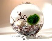 Globe Marimo Terrarium Kit* Indoor Garden Best Selling Items Zen Garden Aquarium Plants Marimo Moss Ball Desk Accessories Live House Plants