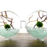 2 Attached Glass Globes Marimo Moss Ball Terrarium Kit