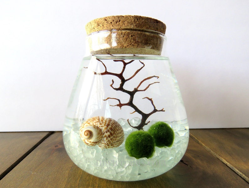 Glass Teardrop With Cork Lid Marimo Moss Ball Terrarium Kit Etsy