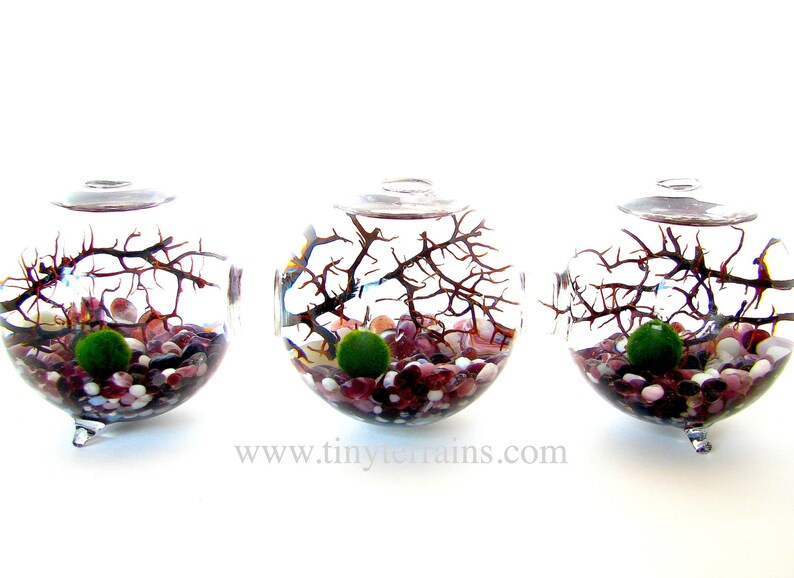 FREE Shipping 3 Attached Glass Globes Marimo Moss Ball image 0