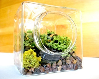 "FREE Shipping & FREE Gift Box, 3"" Moss and Lichen Geometric Terrarium Kit, desk accessories, office gift, house plants, desk plant, zen gift"