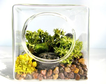 """FREE Shipping, 3.5"""" Moss and Lichen Geometric Terrarium Kit Glass Cube, unique plant gift, house plant gift, home decor gift"""