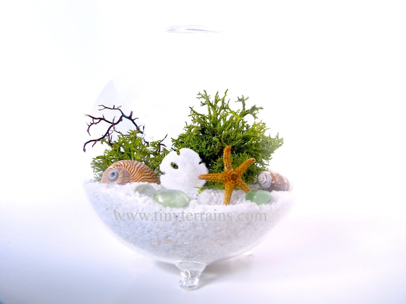 Beach Style Moss Or Lichen Terrarium Kit In A Glass Globe With Etsy
