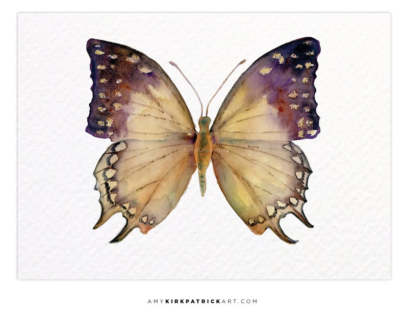 GREAT NAWAB Butterfly 63 ACEO Print of Watercolor Painting image 0