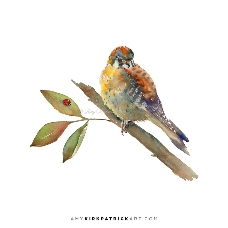 AMERICAN KESTRAL Bird Watercolor Painting Signed Art Prints image 0