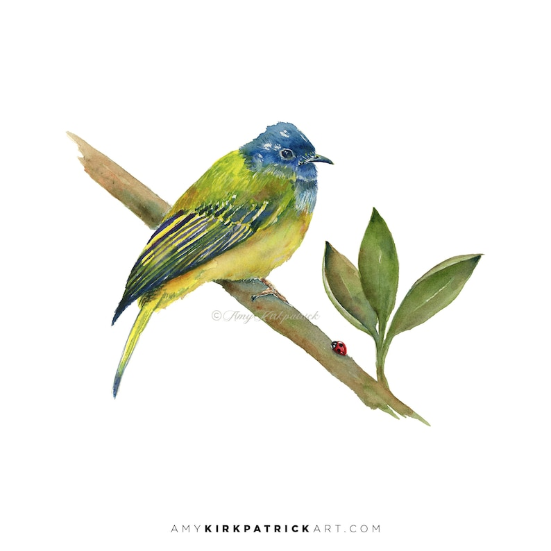 CANARY FLYCATCHER Bird Watercolor Painting Signed Art Prints image 0