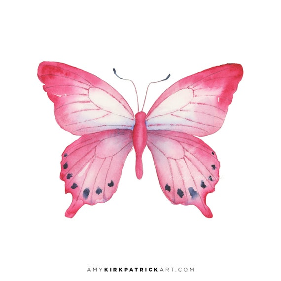 Pink Laglaizei Butterfly 108 Watercolor Painting Signed Art Etsy