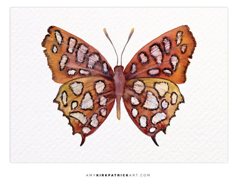 HUTCHINSONS HIGHFLYER Butterfly 61 ACEO Print of Watercolor image 0