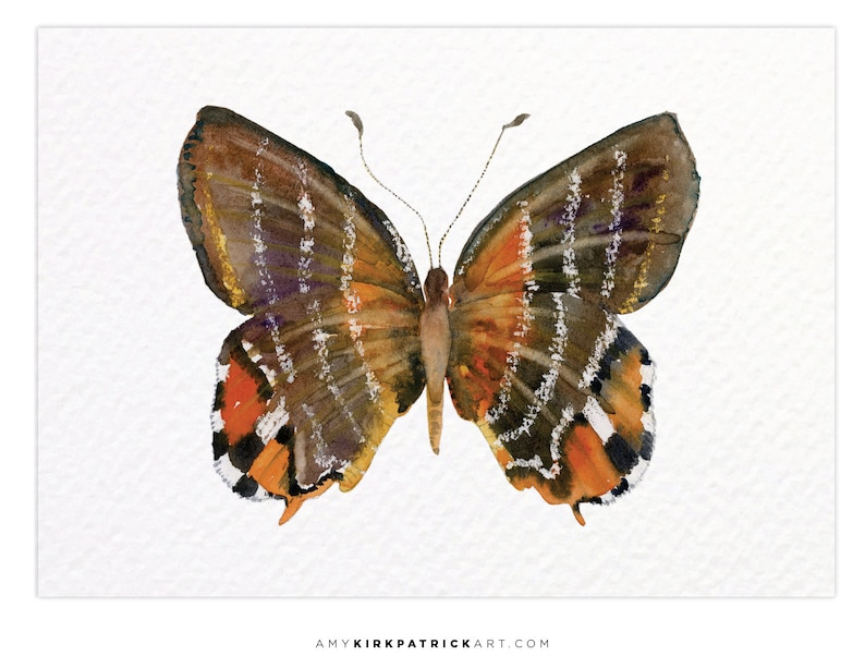 EUSELASIA BUTTERFLY 60 ACEO Print of Watercolor Painting image 0