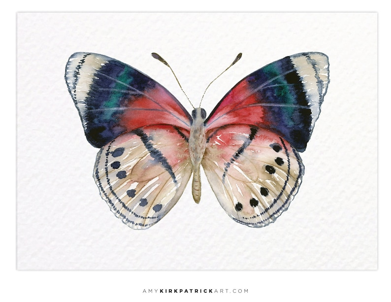 PERISAMA VANINKA Butterfly 30 ACEO Print of Watercolor image 0