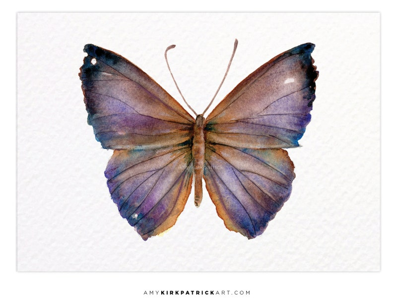 PURPLE PANDEMOS Butterfly 18 ACEO Print of Watercolor image 0