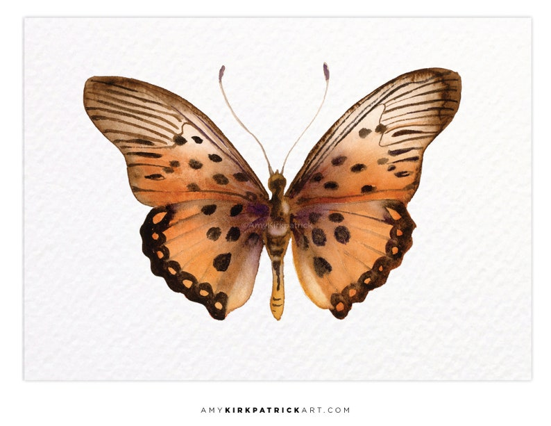TRIMANS BUTTERFLY 26 ACEO Print of Watercolor Painting image 0