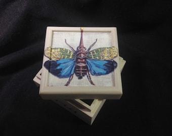 Lantern bug hand painted small box