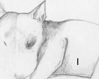 English Bull Terrier Line Drawing - Print to frame