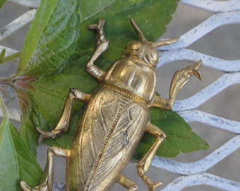 Large Brass Beetles (1 pc)