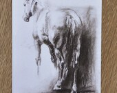 Postcard Horse 4