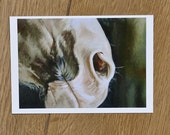 Horse Mouth Postcard...