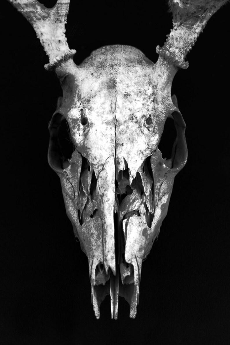 Deer skull skeleton dark art photography print