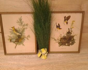 Vintage framed bird pictures - Yellow Breasted Chat bird - Cedar Waxwing - bird nature pictures - wildlife - bird wall art - vintage birds