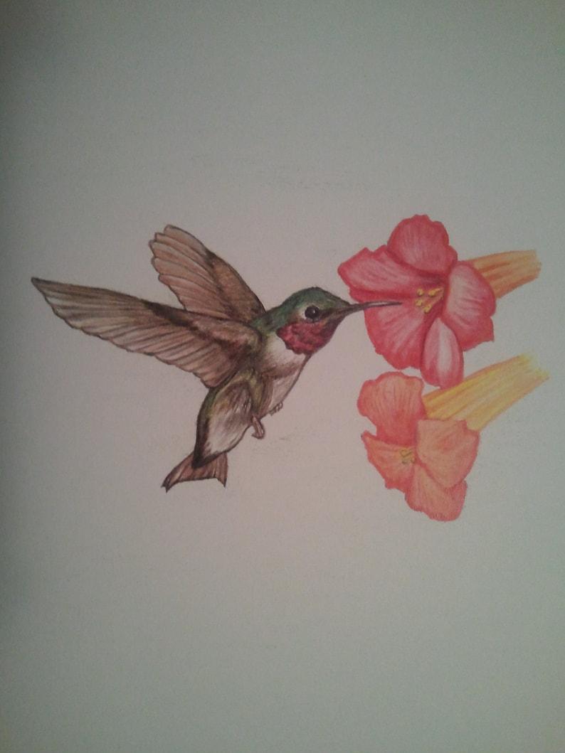 Hummingbird Original Color Pencil Drawing Nature Painter ...