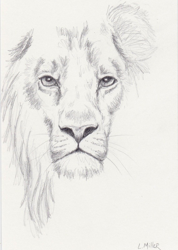Lion Pencil Drawing, Original 5x7 Big Cat Sketch, Lion Fine Art