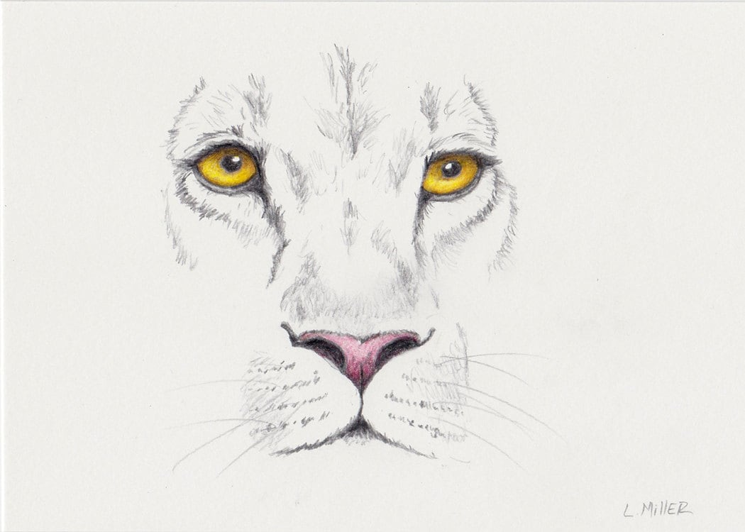 Lion pencil drawing original 5x7 large cat sketch lion fine art