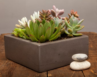 "Concrete Planter Centerpiece - 7"" Square Centerpiece"