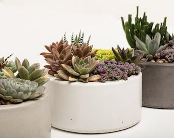 Concrete Planter, Succulent Planter, Concrete, Planter, Concrete Bowl, Catch All Bowl, 3 colors to choose