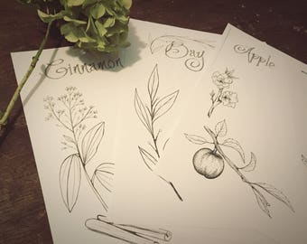 Herbal Pack - DIY Printable Hand Drawn Book of Shadows Template - 8.5 x 11 - PDF Instant Digital Download - 40 Pages