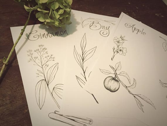 herbal pack diy printable hand drawn book of shadows etsy
