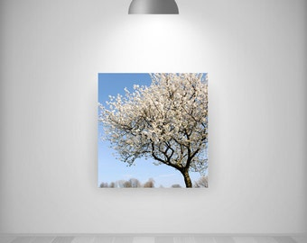 Canvas, CHOOSE ANY Photo as a signed square Canvas, Fine Art photo print, 12x12, 16x16 Ready to hang