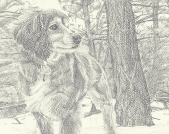 "Custom Pet Portrait 6x8"" - Drawing From Your Photo - Single Subject - Pet Drawing"