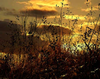 Silhouette Grass Sunrise Sunset Landscape Gold Yellow Clouds