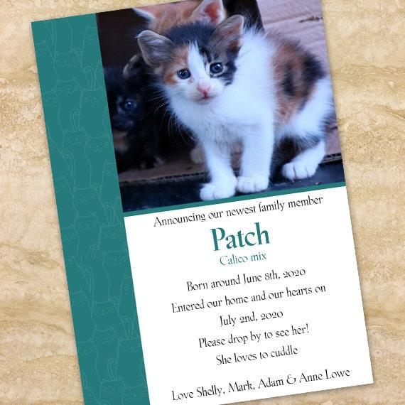 kitten announcement, new kitten announcement, kitty can welcome party, welcome party, kitten party, four legged friends, new baby, IN714
