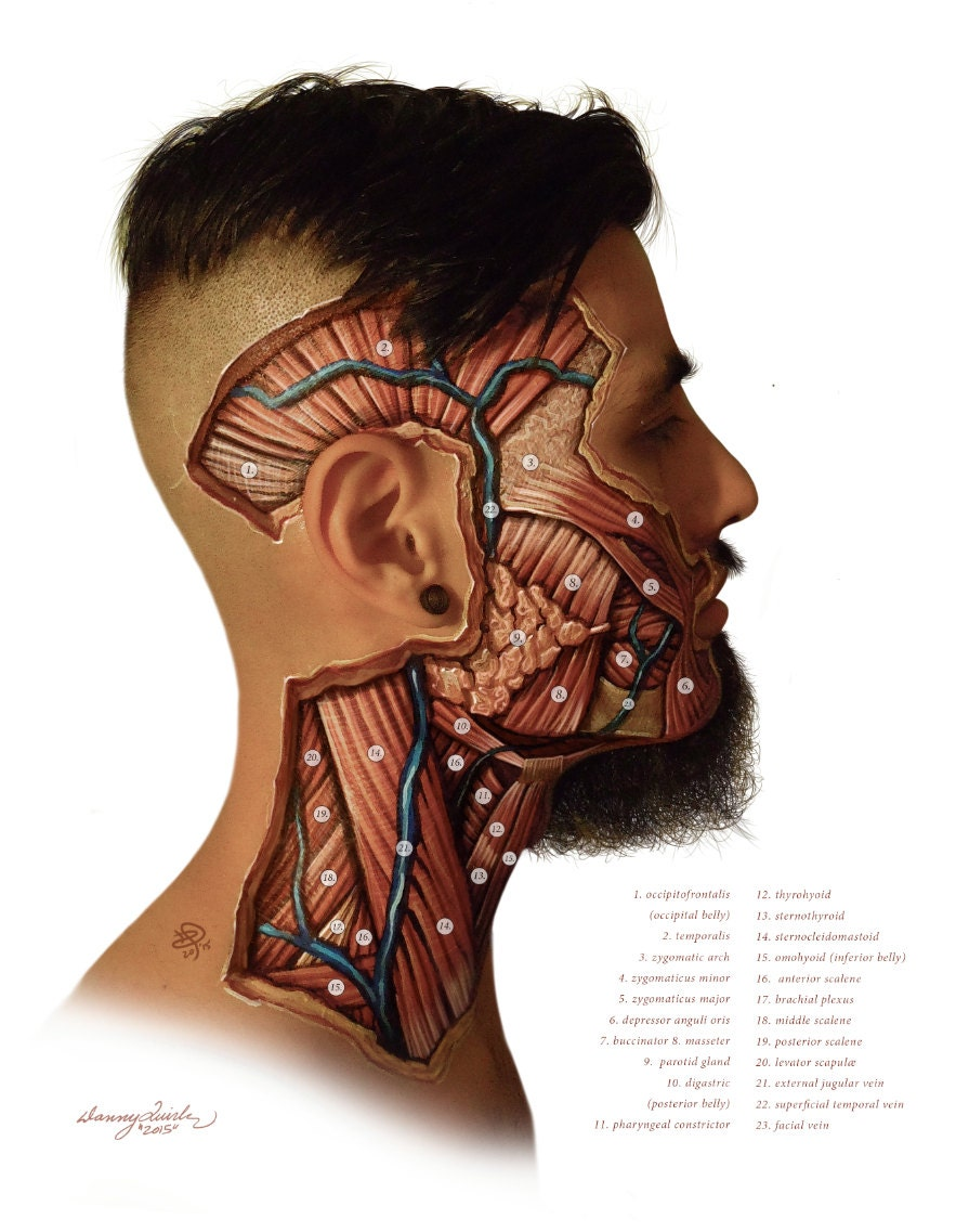 Facial Dissection Etsy