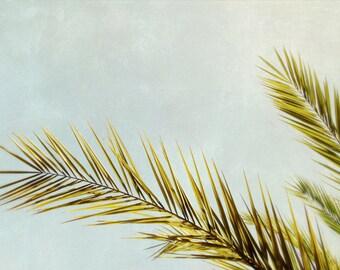 palm tree art // mid century photography // dreamy modern beach house artwork - Frond II 16x24