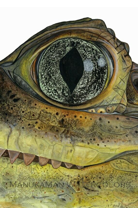Krokodil Auge Aquarell Studie von Damon Crook Print Größe für | Etsy