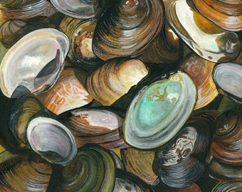 Cape Cod Kettle Pond Freshwater Mussel shells (Print of a watercolor by Damon Crook sized for 11 x 14 matted frame)