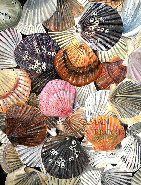 bay scallop shells watercolor printdamon crook 11 x 14