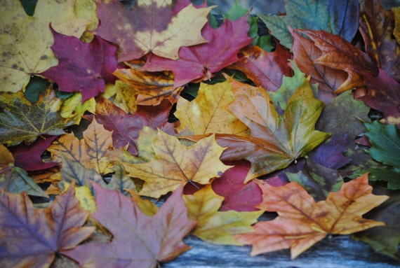 Preserved Maple Leaves, CHOOSE YOUR AMOUNT. Fall Decor, Wedding Decoration. Maple Leaf Table, Aisle Decor. Real Leaves.