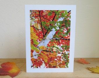 Autumn Kaleidoscope, Birch Tree in Vermont - Inspirational / Birthday / Just Because Greeting Card