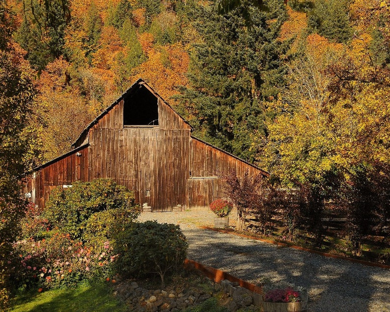 Barn in Autumn Photo Barn at the Blueberry Farm photo home image 0